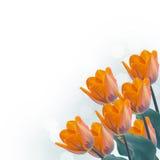 Prentbriefkaar met verse tulpenbloemen en lege plaats voor uw te Stock Fotografie