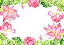 Prentbriefkaar Roze Lotus Flower Watercolor Illustration Royalty-vrije Stock Afbeelding