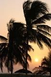 Prentbriefkaar van Gambia Stock Foto's