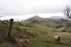 Prentbriefkaar voor Nieuw Zeeland Royalty-vrije Stock Afbeelding
