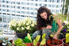 Preoccuparsi della donna del suo piccolo orto domestico nel balcone immagine stock
