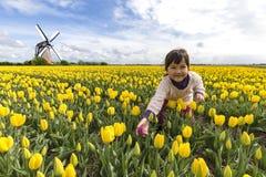 Preoccuparsi il tulipano rosso solo fra gli altri immagine stock libera da diritti