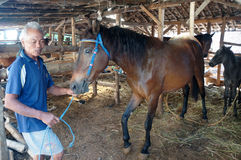 Preoccupato per i cavalli Immagini Stock