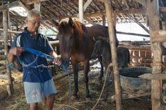 Preoccupato per i cavalli Fotografia Stock Libera da Diritti