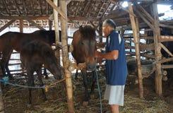 Preoccupato per i cavalli Fotografia Stock