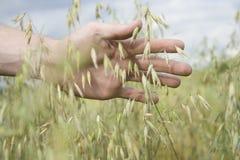 Preoccupazione circa il raccolto Immagini Stock Libere da Diritti