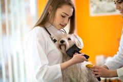 Preoccupi e consolidando il cane maltese che lo spazzola nella clinica del veterinario fotografia stock libera da diritti