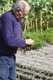 A preparação das plantas para plantar Fotografia de Stock Royalty Free