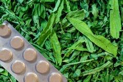 Preparação de ervas medicinais e um bloco das tabuletas Fotos de Stock Royalty Free
