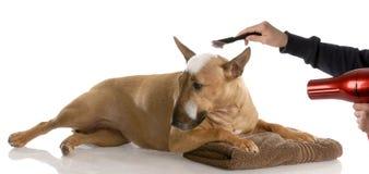 Preparação do cão Fotografia de Stock