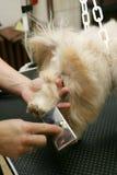 Preparação do cão fotos de stock royalty free