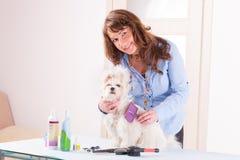 Preparação do cão imagem de stock royalty free