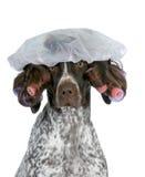 Preparação do cão foto de stock