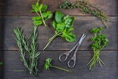 Preparação fresca das ervas para secar fotos de stock royalty free