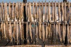 Preparação secada dos peixes Imagem de Stock