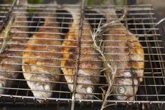 Preparación de la trucha de los pescados frescos en parrilla eléctrica Imagen de archivo libre de regalías