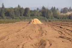 Preparación de las cosechas para el invierno foto de archivo