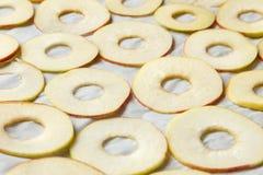Preparación de las manzanas para secarse Imagen de archivo libre de regalías