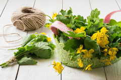 Preparación de plantas medicinales - celandine para secarse imagen de archivo
