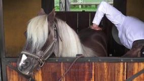 Preparación del caballo, equina almacen de video