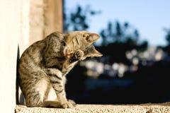 Preparación del gato Fotografía de archivo
