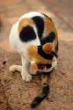 Preparación del gato del primer imagen de archivo