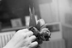 Preparación del loto para los monjes por el loto de la belleza Imagenes de archivo