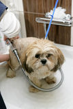 Preparación del perro Foto de archivo