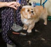 Preparación del perro Fotografía de archivo libre de regalías