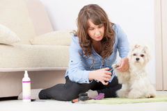 Preparación del perro foto de archivo libre de regalías