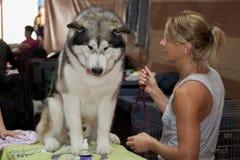 Preparación del perro Imagen de archivo