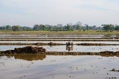 Preparación del suelo para el campo de arroz imagen de archivo