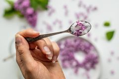 Preparaci?n p?rpura fresca hermosa del blossomsHomemade de la lila del az?car de la lila con fragancia que sorprende fotografía de archivo libre de regalías