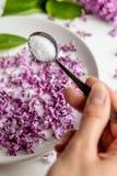 Preparaci?n p?rpura fresca hermosa del blossomsHomemade de la lila del az?car de la lila con fragancia que sorprende imagen de archivo
