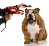 Preparación del perro Imagenes de archivo