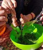 Preparaciones para cocinar del campo - los niños dan cortar las plantas comestibles en un intestino fotografía de archivo