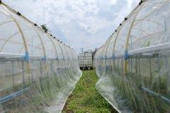 Preparando attrezzatura per la coltura delle verdure non tossiche Fotografia Stock Libera da Diritti