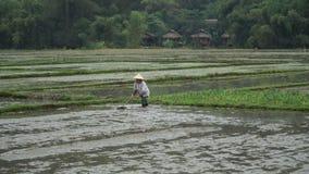 Preparando el campo para plantar el arroz metrajes