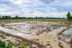 Preparando il suolo per la piantatura del riso Fotografia Stock