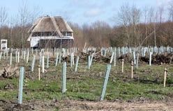Preparando il terreno per la piantatura degli alberi immagine stock