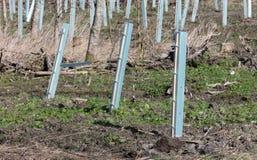 Preparando il terreno per la piantatura degli alberi fotografie stock