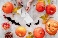 Preparando per Halloween Pipistrelli del taglio delle mani da carta Figure e zucche sulla vista superiore del fondo grigio Immagine Stock