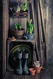 Preparando plantas da mola em uma vertente de madeira velha Foto de Stock