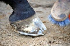 Preparando seu cavalo Foto de Stock