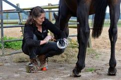 Preparando seu cavalo Fotos de Stock Royalty Free