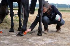 Preparando seu cavalo Fotografia de Stock Royalty Free