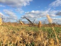 Preparandosi all'azienda agricola fotografia stock