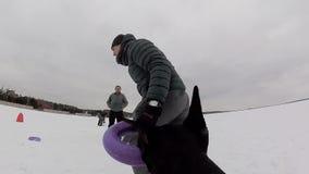 Preparandosi e giocare con i Dobermans dei cani su un campo nevoso stock footage