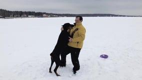 Preparandosi e giocare con i Dobermans dei cani su un campo nevoso video d archivio