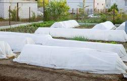 Preparação do jardim antes da geada Fotografia de Stock Royalty Free